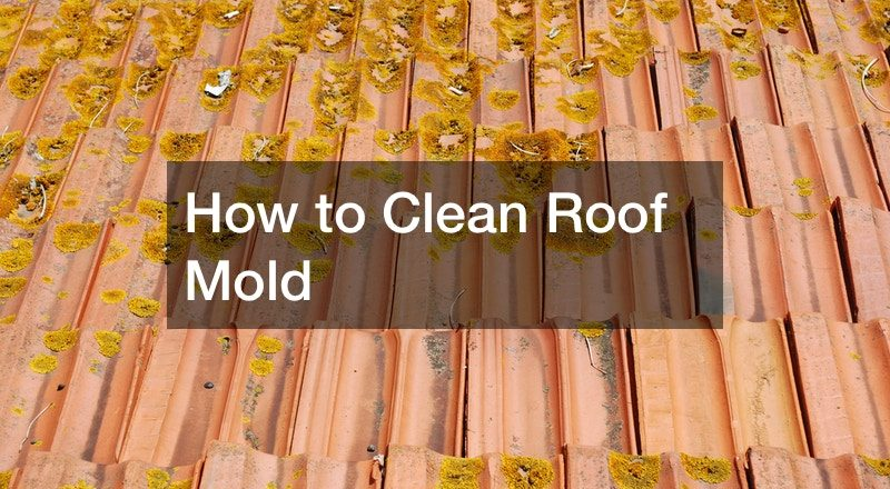 How to Clean Roof Mold